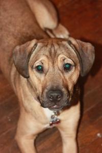 My precious puppy Mal.